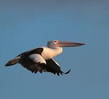Sundown Pelican trio by Seesee
