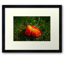 Water Droplet Petals Framed Print