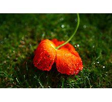 Water Droplet Petals Photographic Print