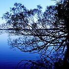 Tree over lake by Ben Kelly