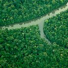 Amazon Jungle River by Alex Evans