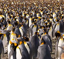 Masses of Kings by Simon Coates