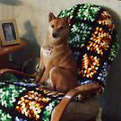 Sporty in his favorite chair by BarbBarcikKeith