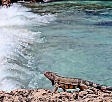 Iguana at beach by DJ Florek