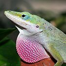 The Green Anolis Lizard by Tawny