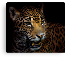 Regard Canvas Print