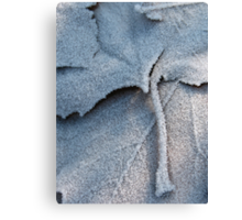 Frosted Leaf © Canvas Print