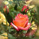 Rosy Day by Lolabud