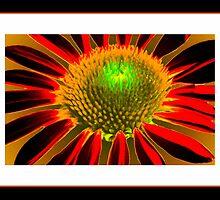 Flowering Contrast by George  Link