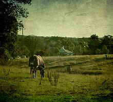 Grazing - Uralla, Northern Tablelands, NSW, Australia by Kitsmumma