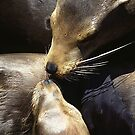 """ Seal With A Kiss "" by GaryGlass"