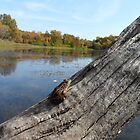 Frog on a log enjoying the peaceful landscape! 3 by Barberelli