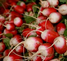 Radishes by bethstedman