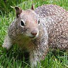 Squirrel by Veronica Hoffman