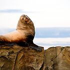 Proud Sea Lion by toby snelgrove  IPA
