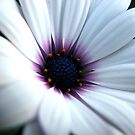 Daisy, Daisy give me your answer do.... by Kathie Nichols