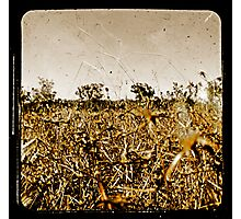 Wild Fields Photographic Print