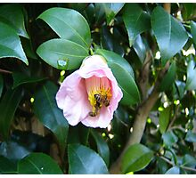 Bees in a Happy Haven Photographic Print