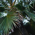 up the palms by frankierose