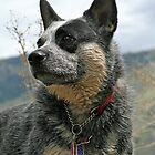 Prideful ACD by Fotography by Felisa ~