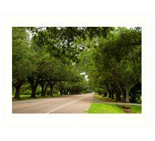 Live Oak Canopy Art Print