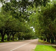 Live Oak Canopy by Bonnie T.  Barry