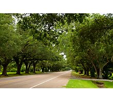 Live Oak Canopy Photographic Print
