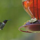 Hummingbirds by Rick  Friedle
