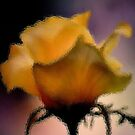 GLASS IMAGE; THE LIME ROSE by Magaret Meintjes