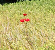 www.lizgarnett.com - July 01 by Liz Garnett