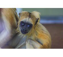 Baby howler monkey Photographic Print