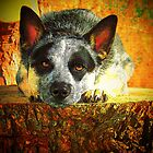 Pensive Cattle Dog by Fotography by Felisa ~