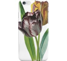 Tulip Vector on White Background iPhone Case/Skin