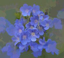 abstract of Cranesbill (wild Geranium) by hilarydougill