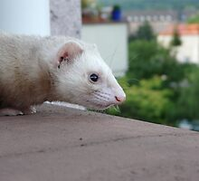 Ferret 2 by bigbizarre
