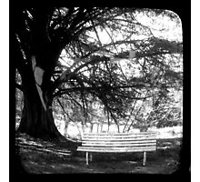 Park Bench - TTV Photographic Print