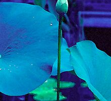 Blue Lotus Bud by Candace Byington
