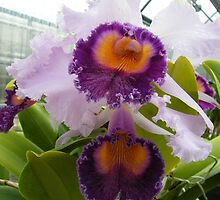 One of the prettiest orchids..... by DonnaMoore