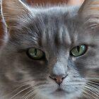 Portrait of Oshi by David Friederich