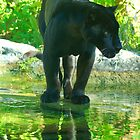 Black Jaguar by dc witmer