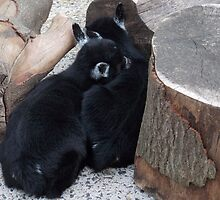 SLEEPING BABY GOATS by alexandriaiona