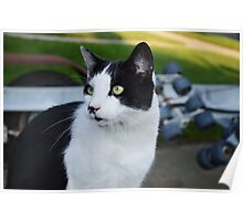 Onion The Cat 5 Poster