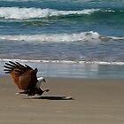 Sea Eagle by GayeL Art