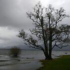 Lake In Killarney by David O'Riordan