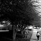 a walk in the trees by Jennifer  Hammann