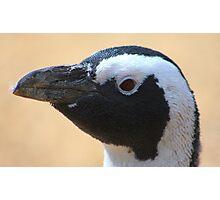Penguin portrait......... Photographic Print