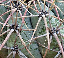 New Mexico Cactus by CynLynn
