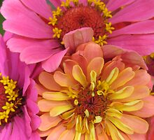 zinnia brightness in the park by Laurkat