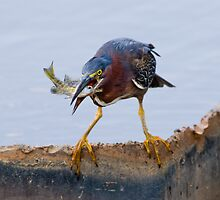Catch of the day by Bonnie T.  Barry
