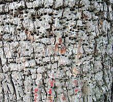 Spirit Wood by butchart